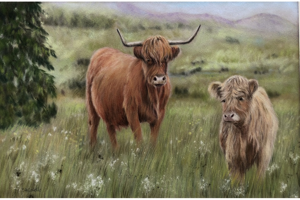 Picture showing a pair of Highland cattle, long haired cows stood in a field one on left has reddish hair and horns, one on right has sandy coloured hair and no horns. Long grass around them with trees, fields and hills in background